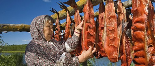 Drying Salmon